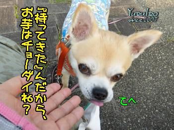 yuruiro20150825_k005