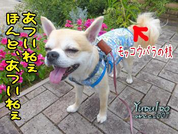 yuruiro20150901_k001