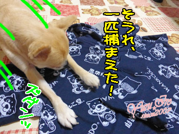 yuruiro20151006_k003