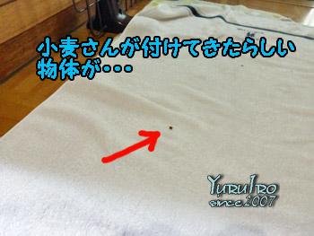 yuruiro20150821_k001