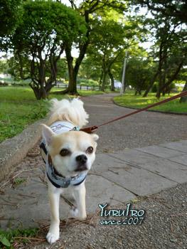 yuruiro20150830_k001