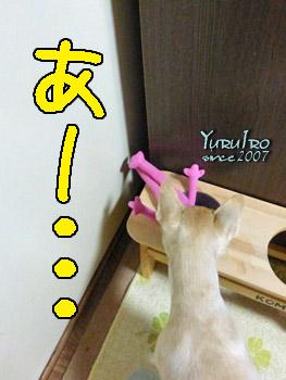 yuruiro20150904_k001