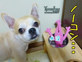yuruiro20150904_k002