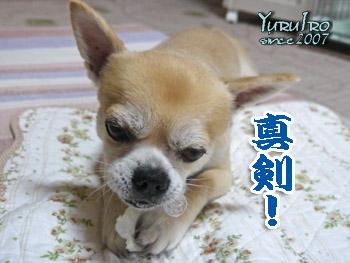 yuruiro20150921_k001