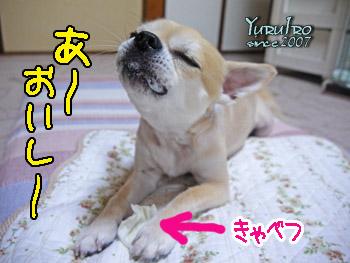 yuruiro20150921_k002