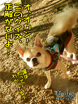 yuruiro20150928_k004