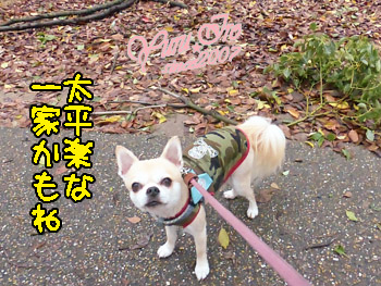 yuruiro20151002_k002