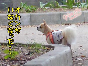 yuruiro20151012_k001