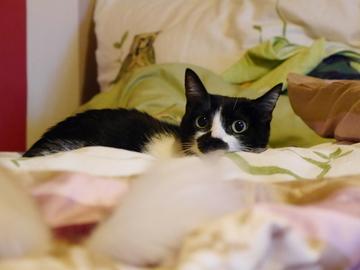 ベッドの上はダメでちゅ~♪6