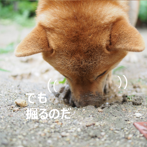 20150820-007.png