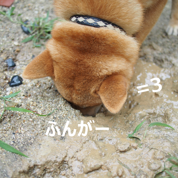 20150820-010.png