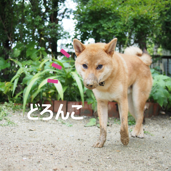 20150820-011.png