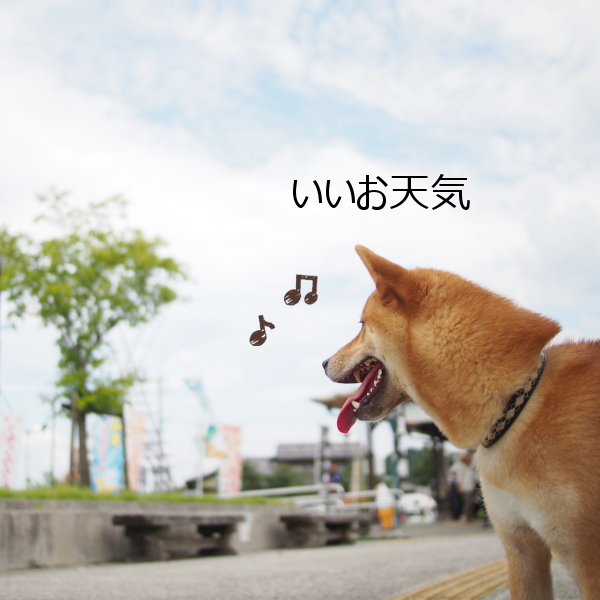 20150822-001.png