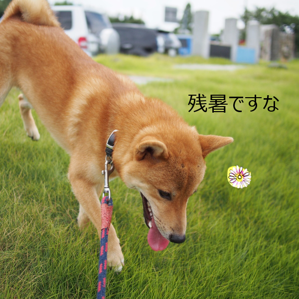 20150822-003.png