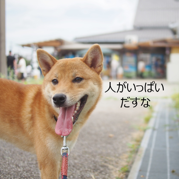 20150822-005.png