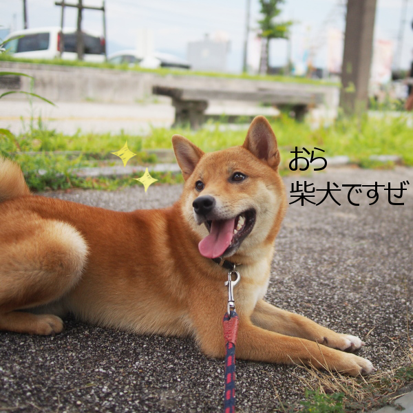 20150822-007.png