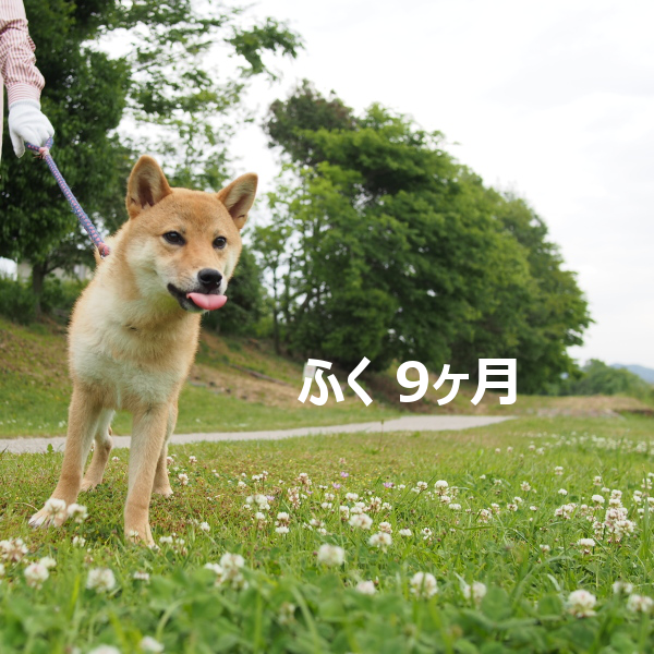 20150829-005.png