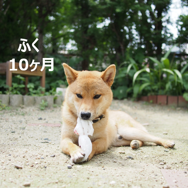 20150829-006.png