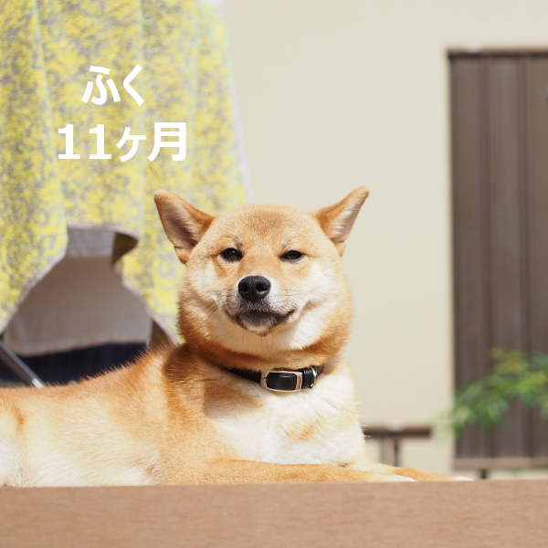 20150829-007.png