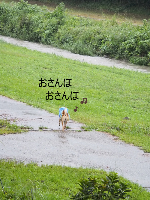 20150918-001.png