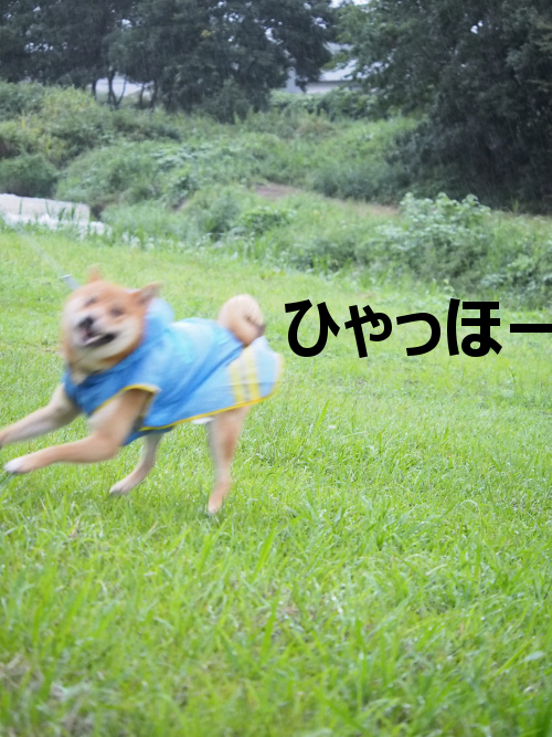 20150918-004.png