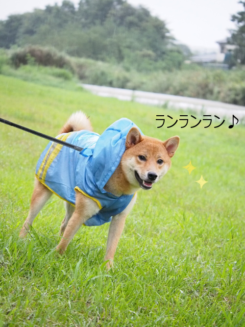 20150918-006.png