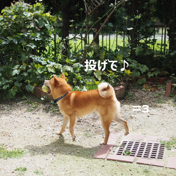 20150922-002.png