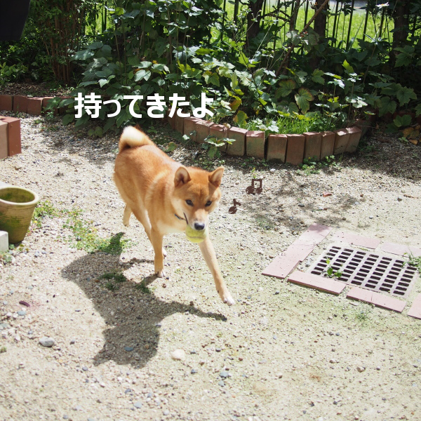 20150922-005.png