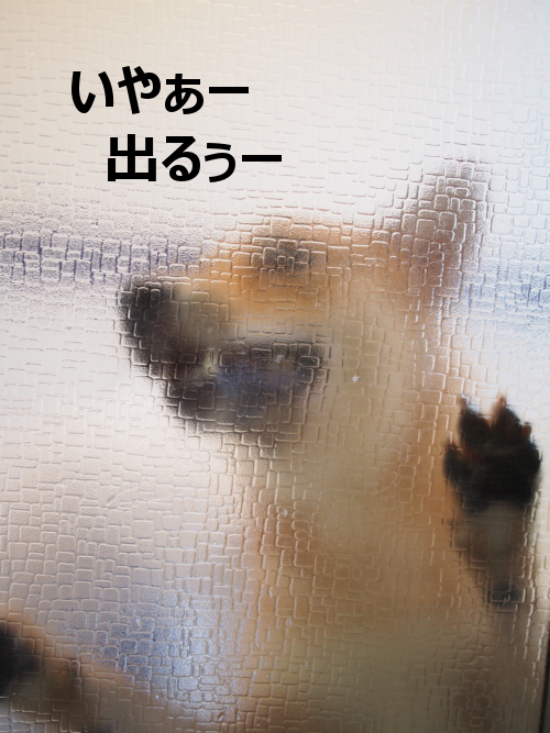 20150924-001.png