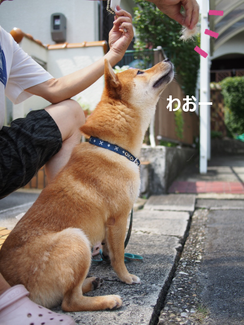 20150930-003.png