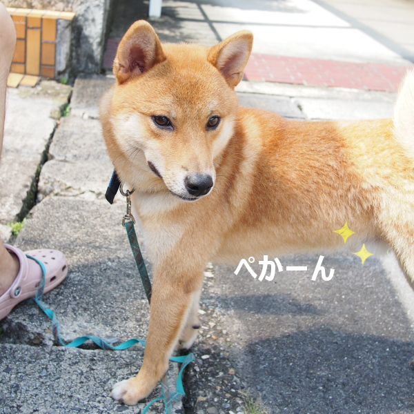 20150930-009.png