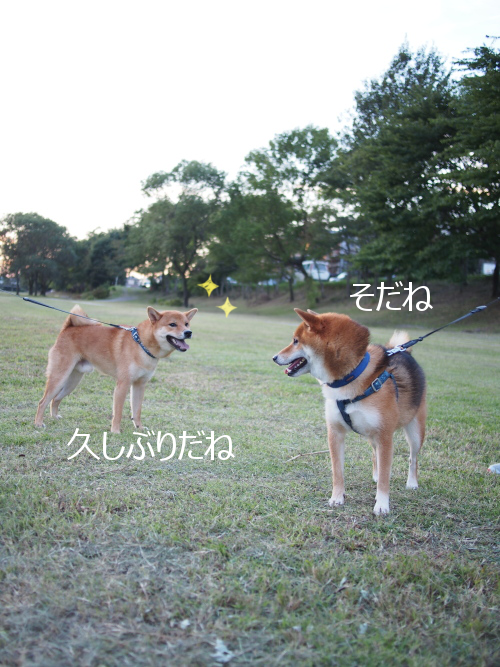 20151016-003.png
