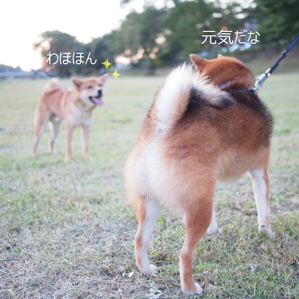 20151016-008.png