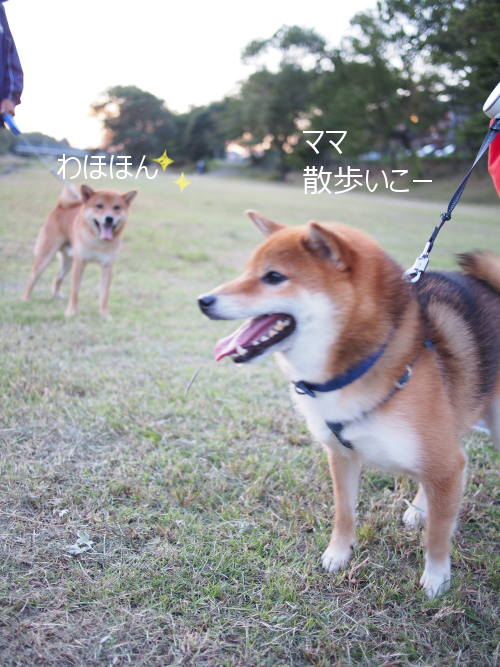 20151016-009.png