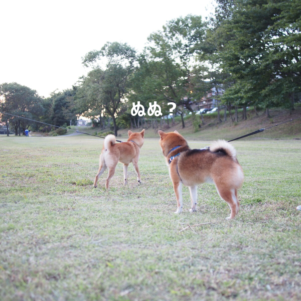 20151016-010.png