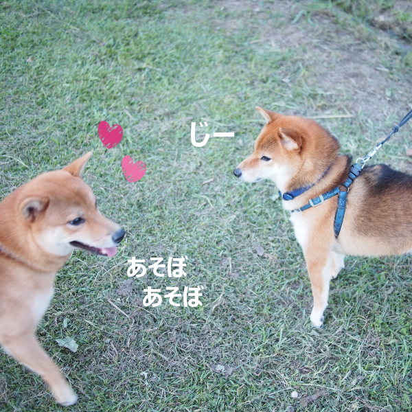 20151018-005.png