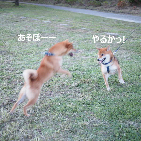 20151018-007.png