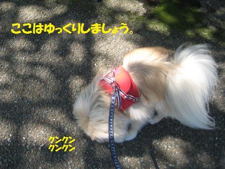 20150915a_4.jpg