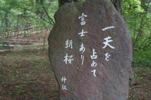 一天を 占めて富士あり 朝桜