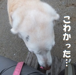 201509113.jpg