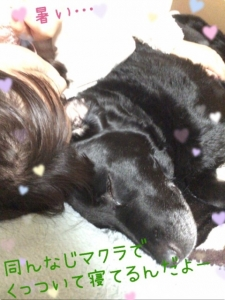 こてつクン (7)