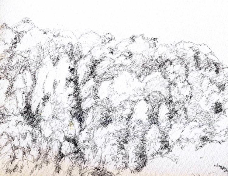 兵庫の秋山 デッサン (750x579)
