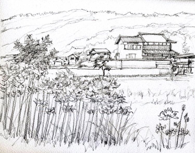 亀岡の彼岸花2 デッサン (750x591)