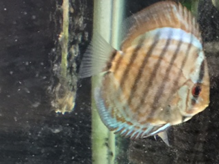 Y 幼魚2