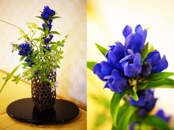 8月の花1