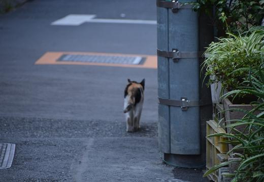 京島・鳩の街・向島 (284)_R
