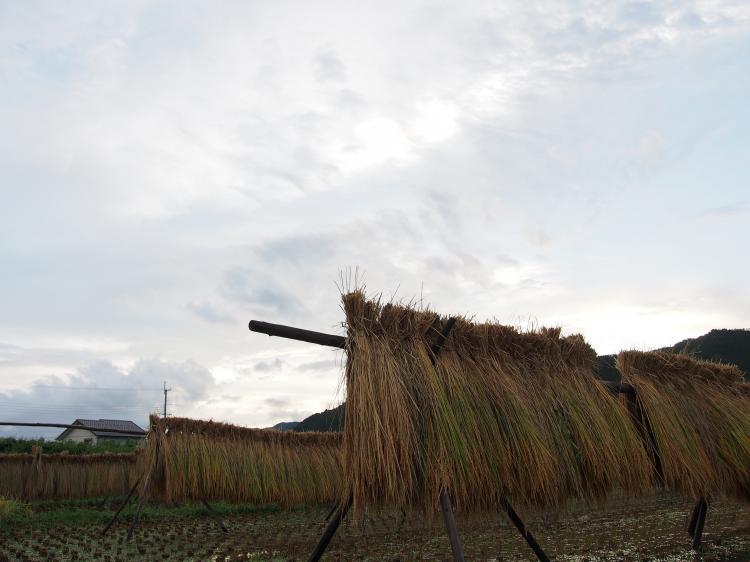 稲木と夏の終わり