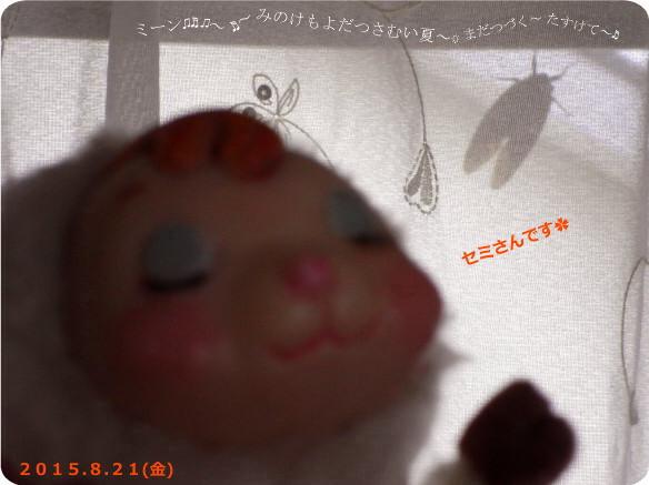 花ブ20150821-2