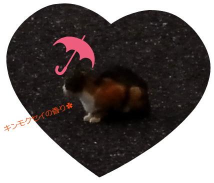 花ブ20150924-2