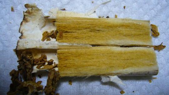 煙草のフィルター断面P1080838